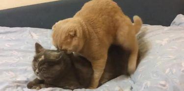 CATS HAVING SEX MAJOR ORGASM TNAFlix Porn Videos